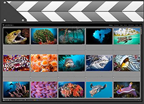 Custom Video Tutorials